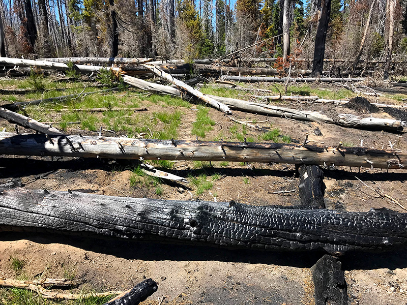 Recent burn areas are littered with downed trees and debris, like this stretch of trail in the Oregon Desert.